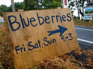 Blueberry picking that-a-way!